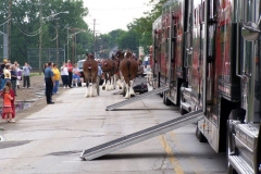 2006: The Budweiser Clydesdales getting ready