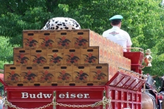 2006: Back of the Budweiser Beer Wagon