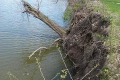 Riverbank erosion